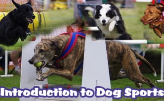 Introduction to Dog Sports