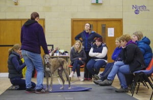 Maintaining the Canine Athlete
