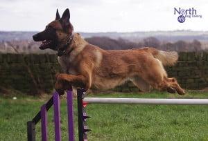 Havoc jumping