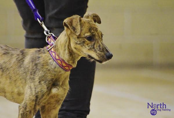 Dog Training Courses North West