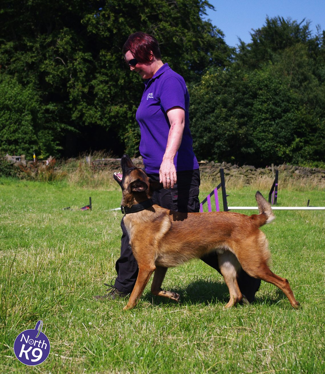 Kennel Club Dog Training Courses